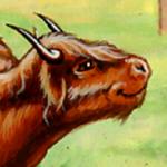 Avatar of Muttonhawk