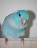 Avatar of ALonelyParrot