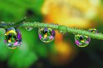 Avatar of prettydrops